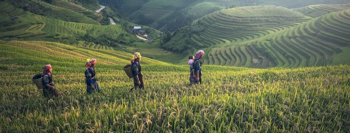 Coffee workers in field